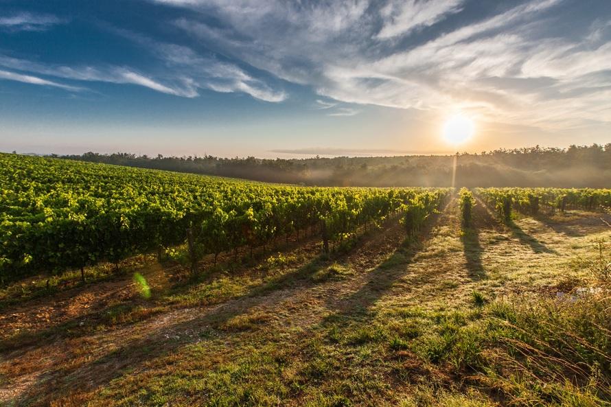 Tras la vendimia, debe ofrecer el vino para darlo a conocer. Fiscalidad de las entregas gratuitas de productos y de la atenciones a clientes.